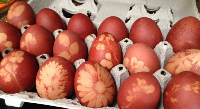 Carton of Homemade Easter Eggs Naturally Dyed with Onion Skins and Flowers