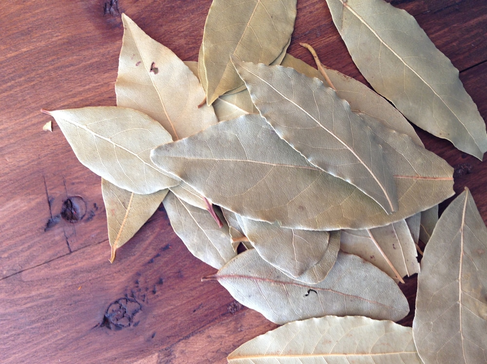 What are bay leaves ciaoflorentina - Cook bay leaves ...