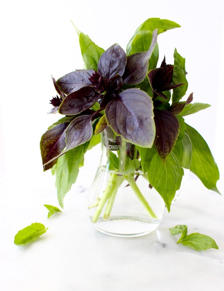 Bouquet of Green and Purple Basil in a Vase
