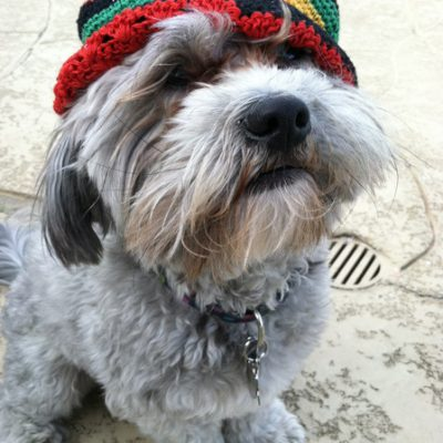 Lucky Peluci – Luckiest Dog Alive