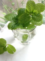 7 Interesting Facts About Mint