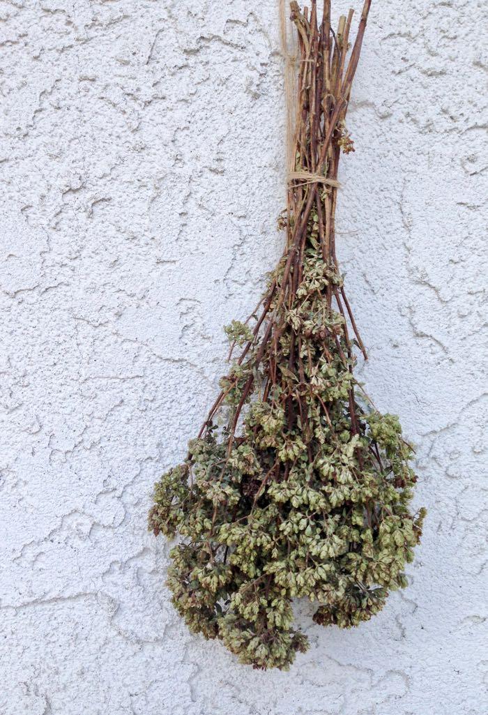 Bunch of Oregano Hanging to Dry