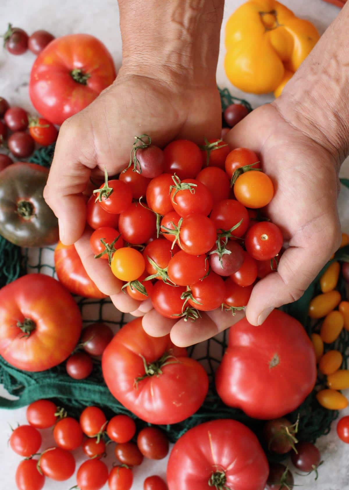 colorful cherry tomatoes for pasta salad